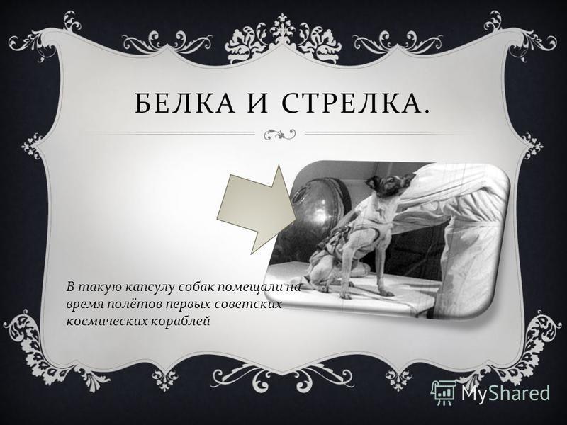 БЕЛКА И СТРЕЛКА. В такую капсулу собак помещали на время полётов первых советских космических кораблей