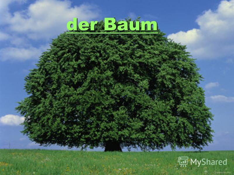 der Baum der Baum der Baum der Baum