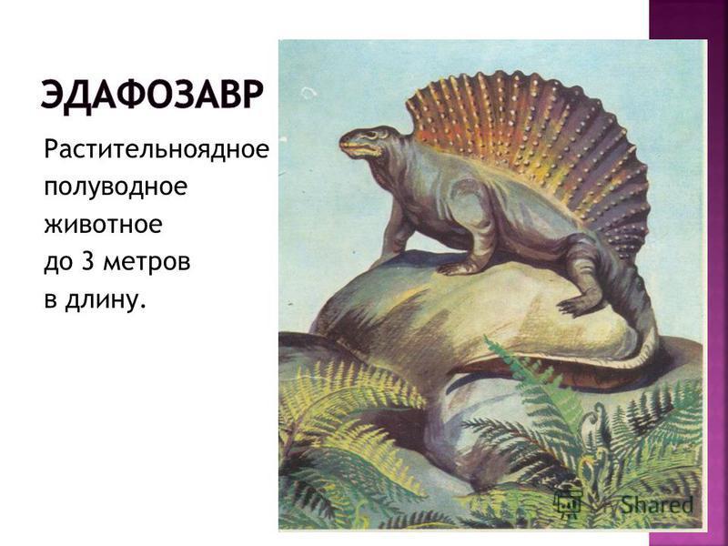 Растительноядное полуводное животное до 3 метров в длину.