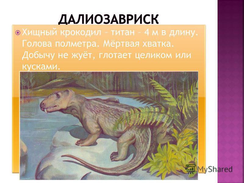 Хищный крокодил – титан – 4 м в длину. Голова полметра. Мёртвая хватка. Добычу не жуёт, глотает целиком или кусками.