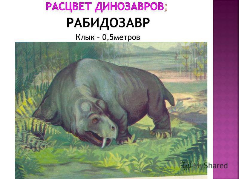 РАБИДОЗАВР Клык – 0,5 метров
