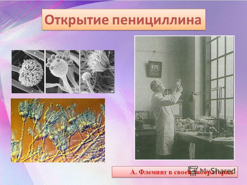 Открытие пенициллина А. Флеминг в своей лаборатории
