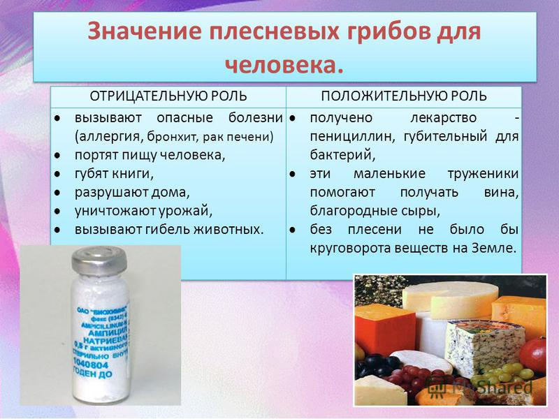 Значение плесневых грибов для человека.