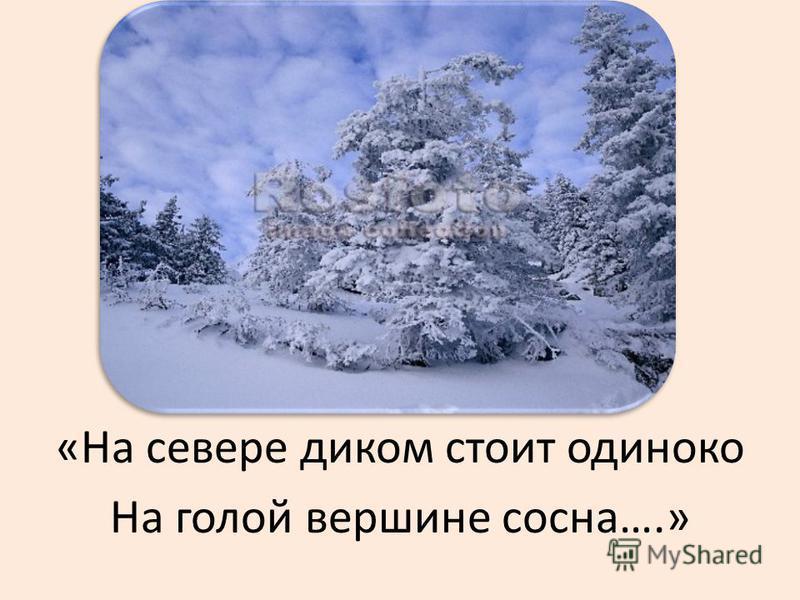 «На севере диком стоит одиноко На голой вершине сосна….»