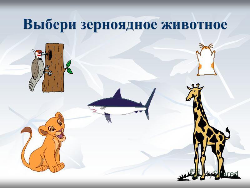 Выбери зерноядное животное