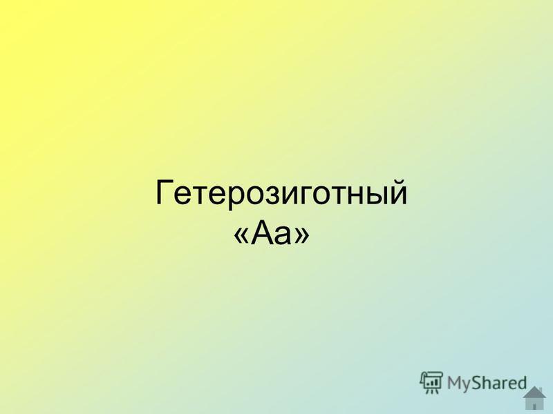 Гетерозиготный «Аа»