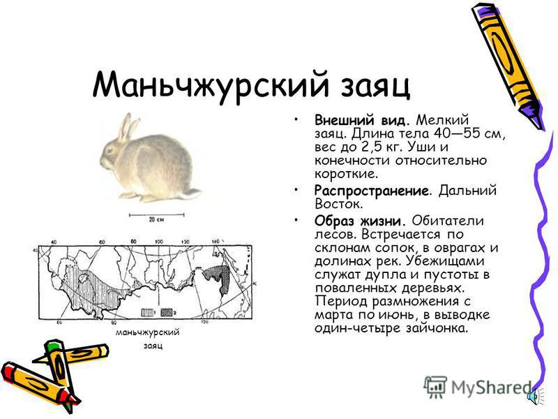 Заяц беляк Внешний вид. Крупный заяц. Длина тела 4474 см, вес 2,5 5,5 кг. Уши относительно короткие, отогнутые вперед, достигают конца морды. Задние конечности средней длины. Распространение. Большая часть территории России. Отсутствует на юго-западе