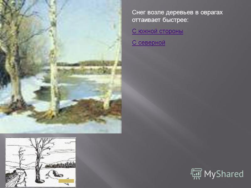 Снег возле деревьев в оврагах оттаивает быстрее: С южной стороны С северной
