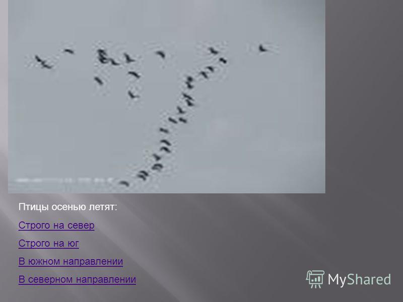 Птицы осенью летят: Строго на север Строго на юг В южном направлении В северном направлении