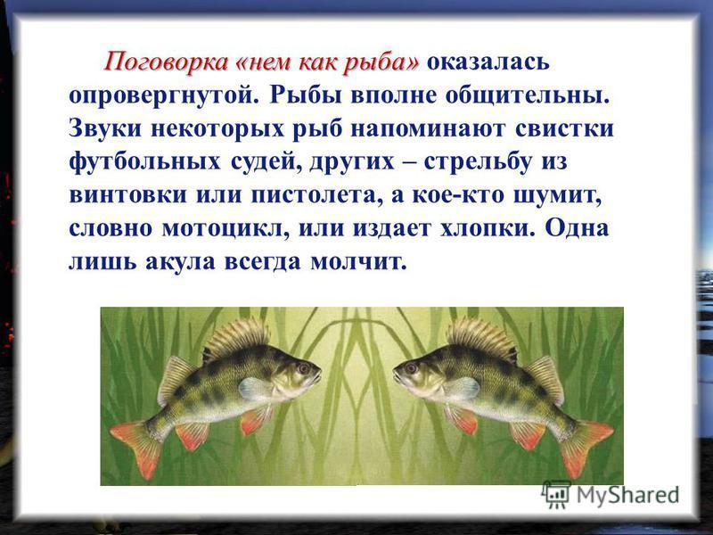Поговорка «нем как рыба» Поговорка «нем как рыба» оказалась опровергнутой. Рыбы вполне общительны. Звуки некоторых рыб напоминают свистки футбольных судей, других – стрельбу из винтовки или пистолета, а кое-кто шумит, словно мотоцикл, или издает хлоп