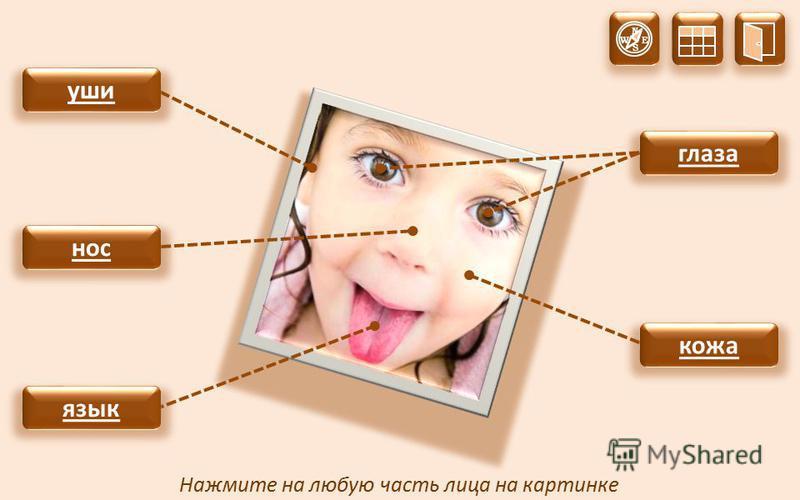 глаза Нажмите на любую часть лица на картинке кожа уши нос язык N S W E