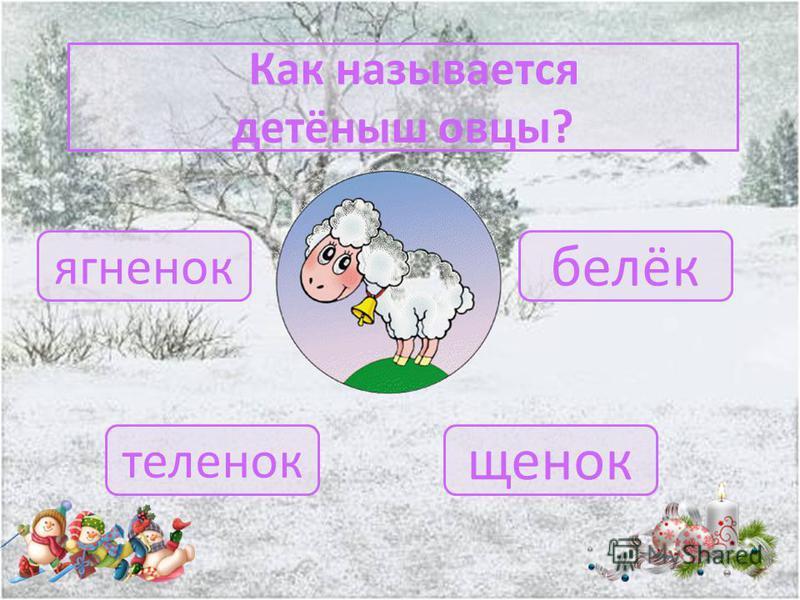 Как ещё можно назвать самца овцы? оверлок овен овчарагнец