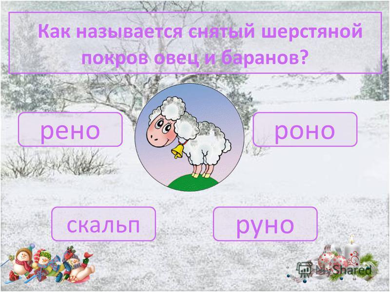 Как называется детёныш овцы? белёк ягненок щенок теленок