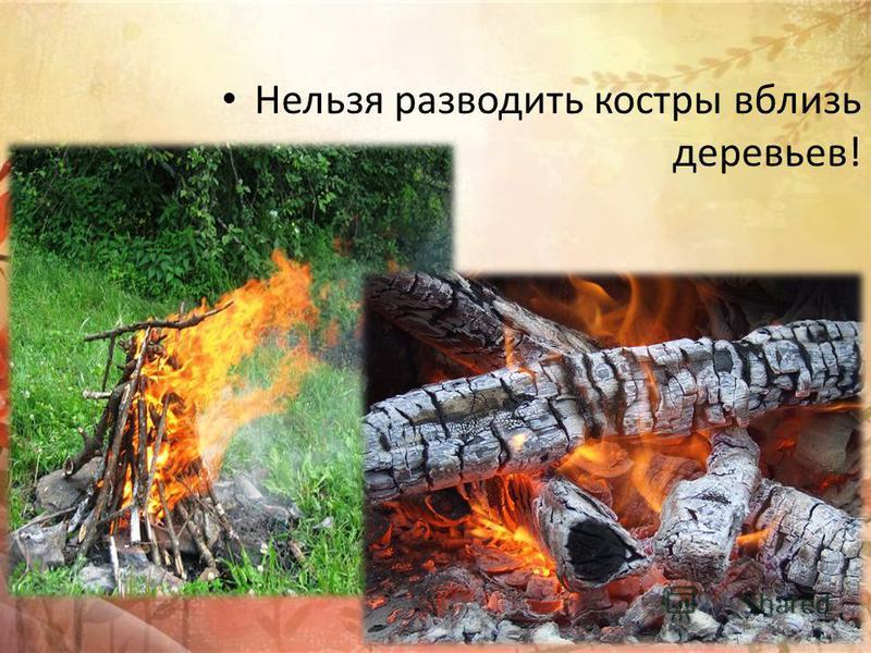 Нельзя разводить костры вблизи деревьев!