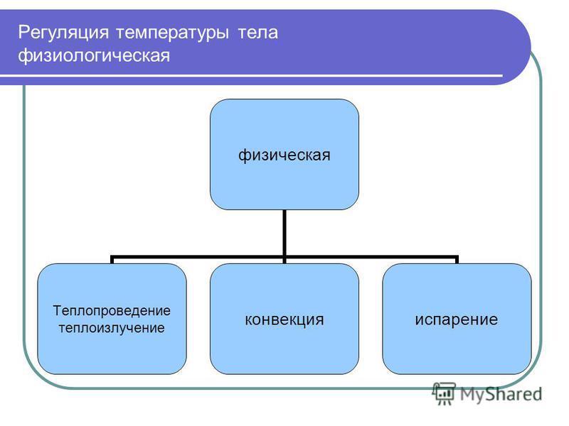 Регуляция температуры тела физиологическаяя физическая Теплопроведение теплоизлучение конвекция испарение