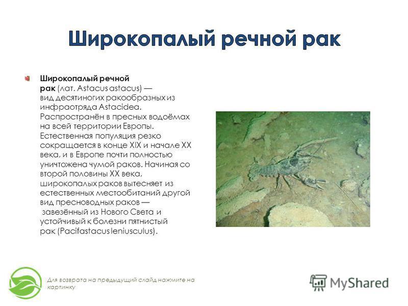 Широкопалый речной рак (лат. Astacus astacus) вид десятиногих ракообразных из инфраотряда Astacidea. Распространён в пресных водоёмах на всей территории Европы. Естественная популяция резко сокращается в конце XIX и начале XX века, и в Европе почти п