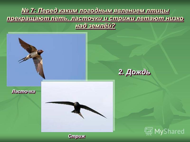 7: Перед каким погодным явлением птицы прекращают петь, ласточки и стрижи летают низко над землёй? 7: Перед каким погодным явлением птицы прекращают петь, ласточки и стрижи летают низко над землёй? 2. Дождь Ласточка Ласточка Стриж Стриж
