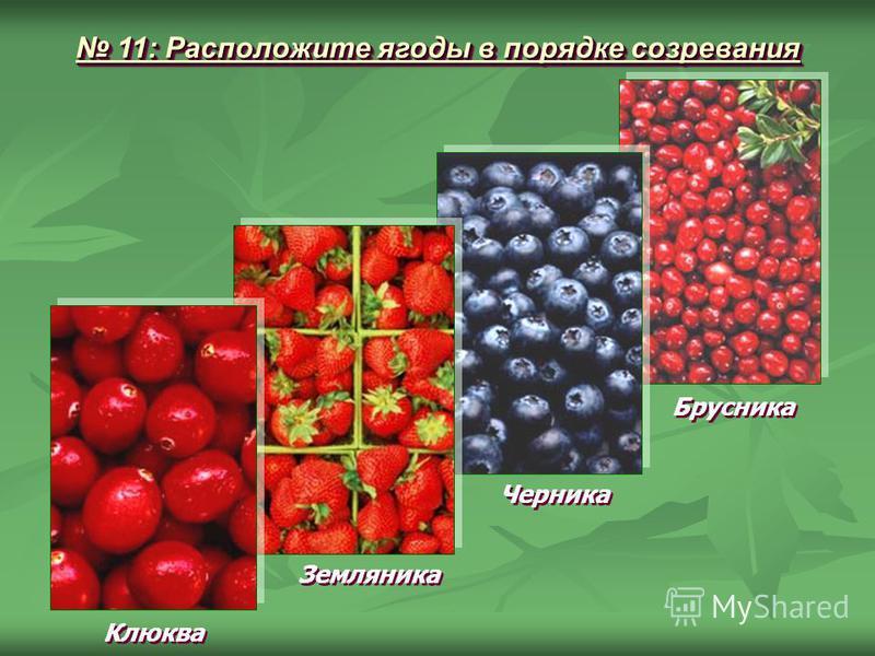 11: Расположите ягоды в порядке созревания 11: Расположите ягоды в порядке созревания Клюква Земляника Черника Брусника