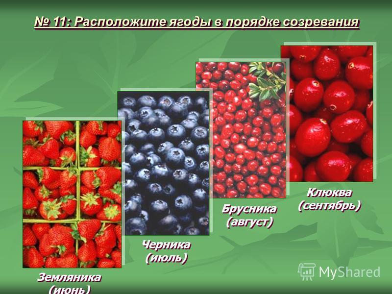 11: Расположите ягоды в порядке созревания 11: Расположите ягоды в порядке созревания Земляника (июнь) Земляника (июнь) Черника (июль) Черника (июль) Брусника (август) Брусника (август) Клюква (сентябрь) Клюква (сентябрь)