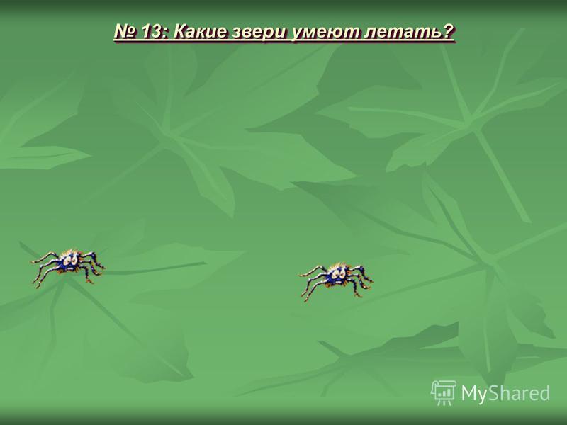13: Какие звери умеют летать? 13: Какие звери умеют летать?