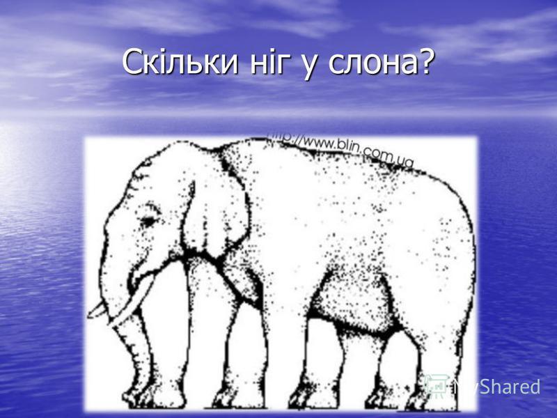 Скільки ніг у слона?