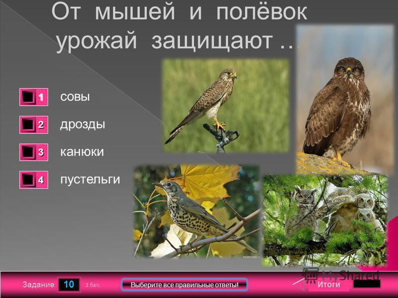 10 Задание Выберите все правильные ответы! От мышей и полёвок урожай защищают … совы дрозды канюки пустельги Итоги 3 бал. 1111 0 2222 0 3333 0 4444 0