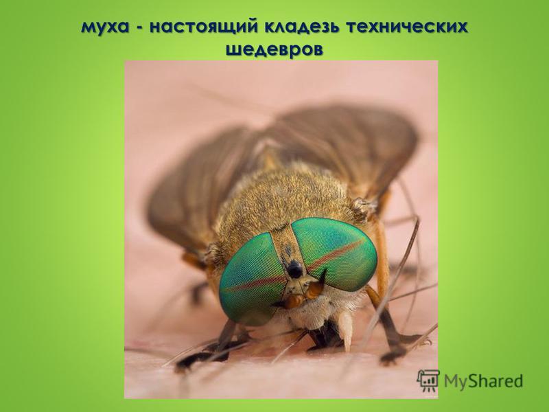 муха - настоящий кладезь технических шедевров
