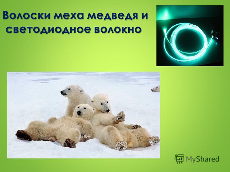 Волоски меха медведя и светодиодное волокно
