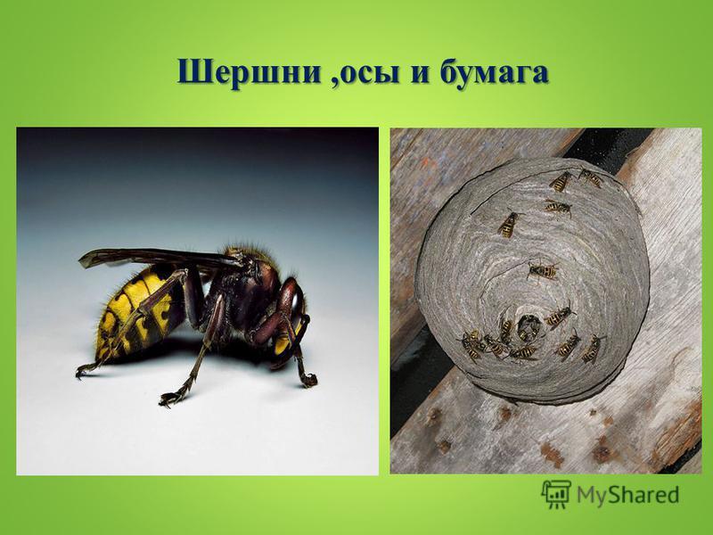 Шершни,осы и бумага