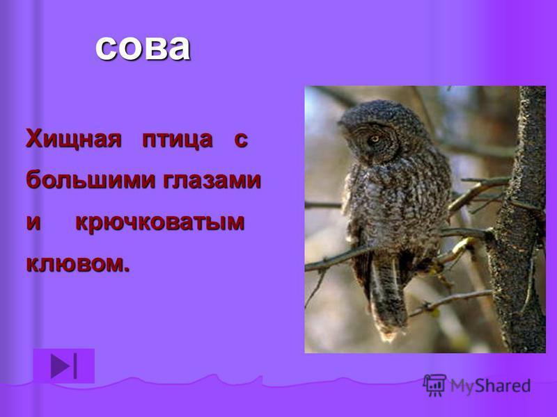 Хищная птица с большими глазами и крючковатым клювом. сова