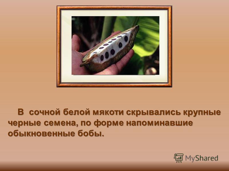 В сочной белой мякоти скрывались крупные черные семена, по форме напоминавшие обыкновенные бобы. В сочной белой мякоти скрывались крупные черные семена, по форме напоминавшие обыкновенные бобы.