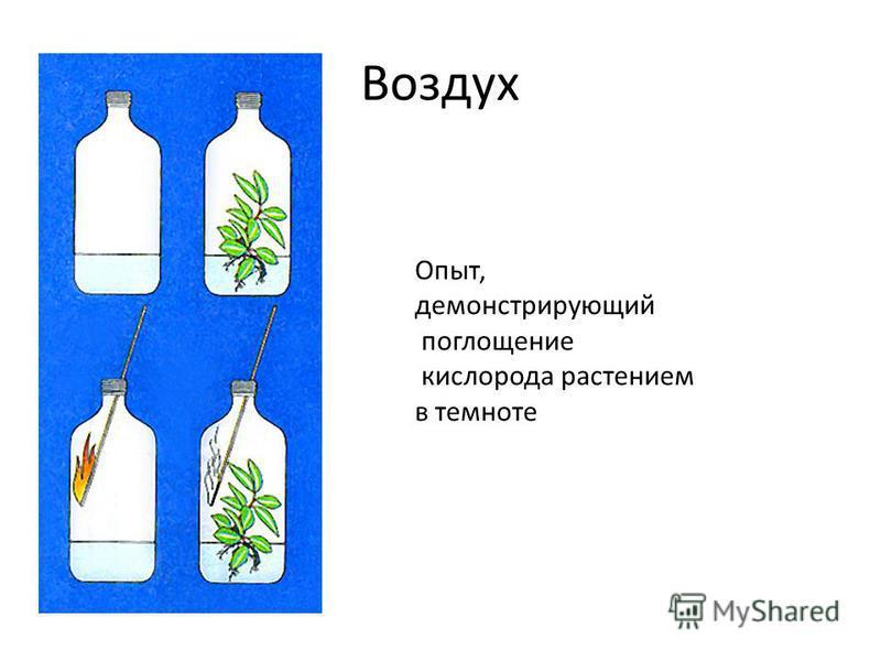 Воздух Опыт, демонстрирующий поглощение кислорода растением в темноте