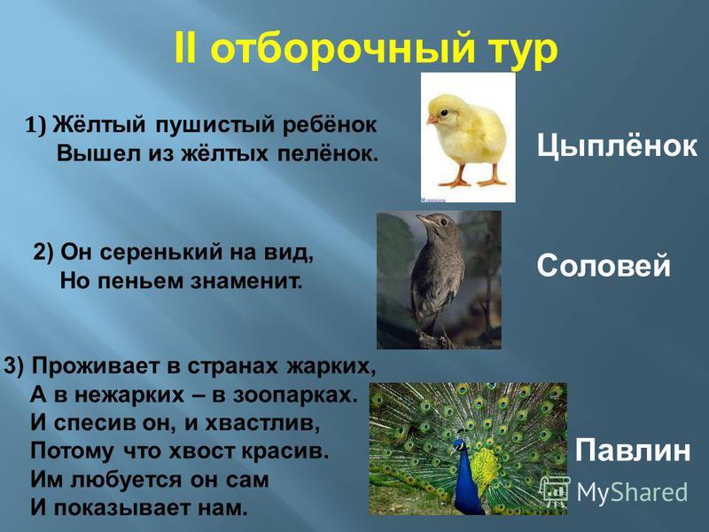 II отборочный тур 1) Жёлтый пушистый ребёнок Вышел из жёлтых пелёнок. Цыплёнок 2) Он серенький на вид, Но пеньем знаменит. Соловей 3) Проживает в странах жарких, А в нежарких – в зоопарках. И спесив он, и хвастлив, Потому что хвост красив. Им любуетс