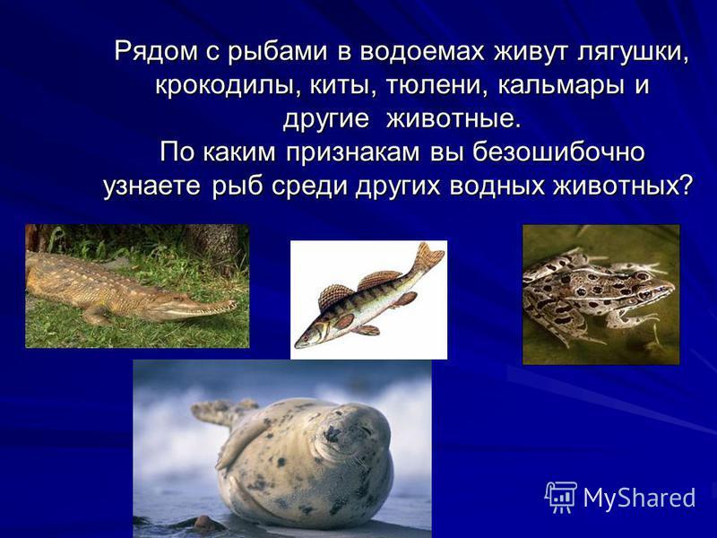 Рядом с рыбами в водоемах живут лягушки, крокодилы, киты, тюлени, кальмары и другие животные. По каким признакам вы безошибочно узнаете рыб среди других водных животных? Рядом с рыбами в водоемах живут лягушки, крокодилы, киты, тюлени, кальмары и дру