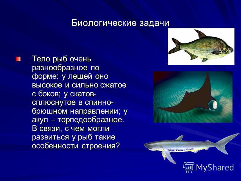 Биологические задачи Тело рыб очень разнообразное по форме: у лещей оно высокое и сильно сжатое с боков; у скатов- сплюснутое в спинно- брюшном направлении; у акул – торпедообразное. В связи, с чем могли развиться у рыб такие особенности строения?