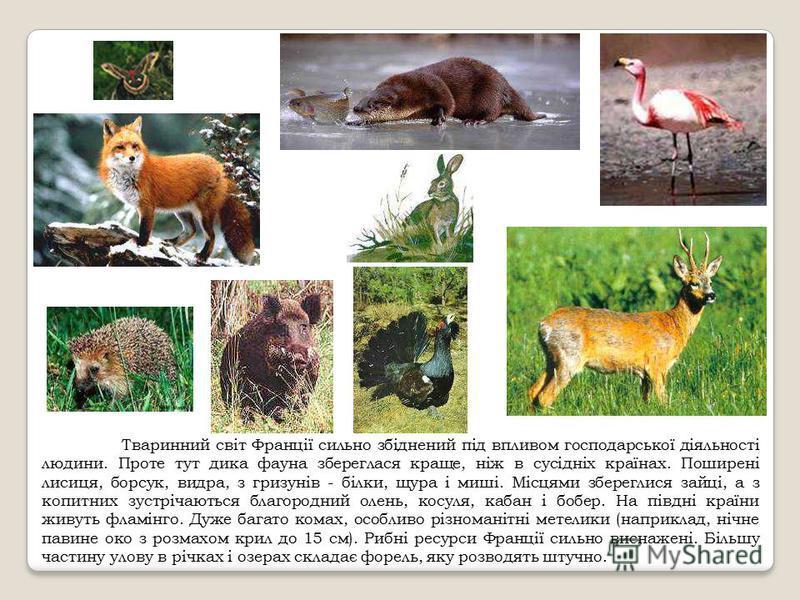 Тваринний світ Франції сильно збіднений під впливом господарської діяльності людини. Проте тут дика фауна збереглася краще, ніж в сусідніх країнах. Поширені лисиця, борсук, видра, з гризунів - білки, щура і миші. Місцями збереглися зайці, а з копитни