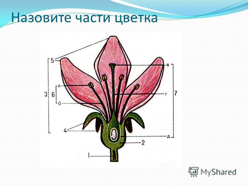 8. Какой набор хромосом после оплодотворения имеет яйцеклетка: а) одинарный;б) двойной;в) тройной 9. Из яйцеклетки после оплодотворения развивается: а) плод;б) зародыш;в) эндосперм 10. Последней фазой развития цветка является образование: а) цветка;б