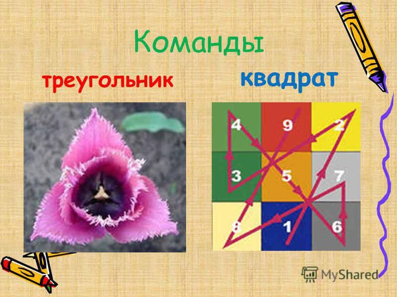 Команды треугольник квадрат