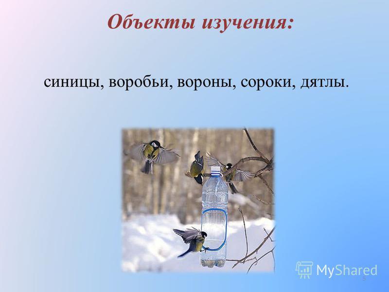 Объекты изучения: синицы, воробьи, вороны, сороки, дятлы. 5