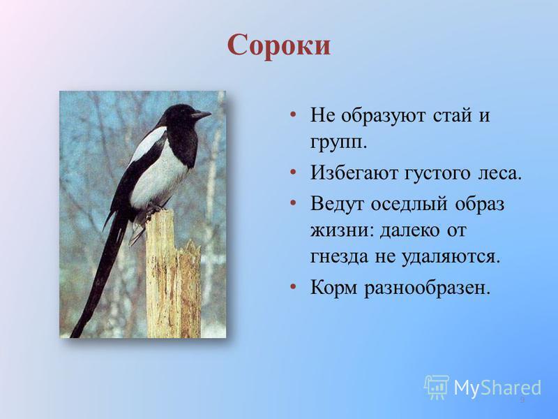 Сороки Не образуют стай и групп. Избегают густого леса. Ведут оседлый образ жизни: далеко от гнезда не удаляются. Корм разнообразен. 9
