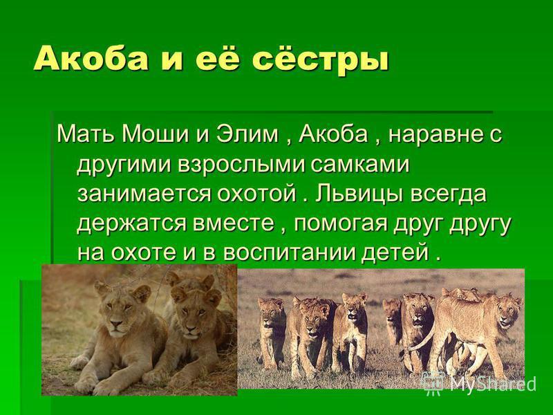 Макинду Макинду - отец Элим и Моши. Он самый крупный лев прайда и живёт с ними уже два года. Большую часть дня он спит.