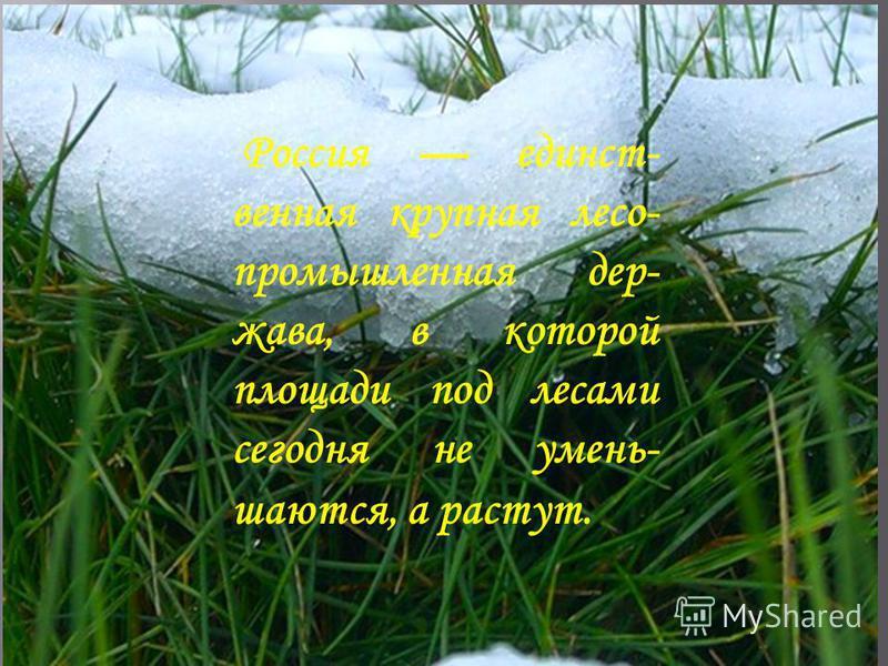 Россия единственная крупная лесопромышленная держава, в которой площади под лесами сегодня не уменьшаются, а растут.