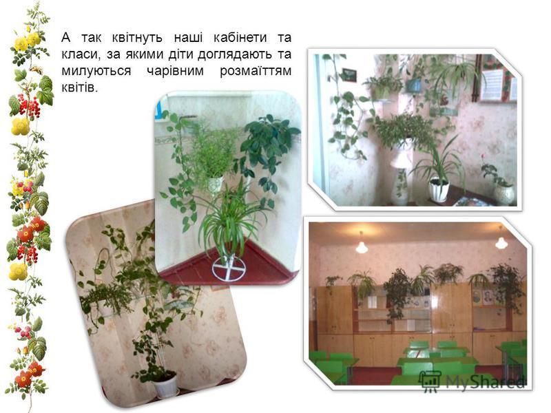 А так квітнуть наші кабінети та класи, за якими діти доглядають та милуються чарівним розмаїттям квітів.