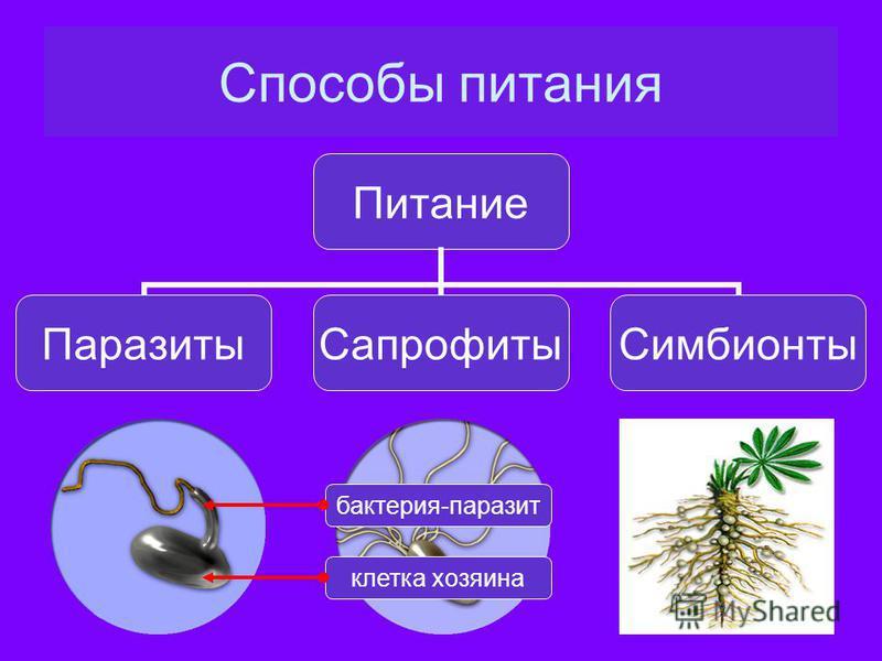 Способы питания Питание Паразиты СапрофитыСимбионты клетка хозяина бактерия-паразит