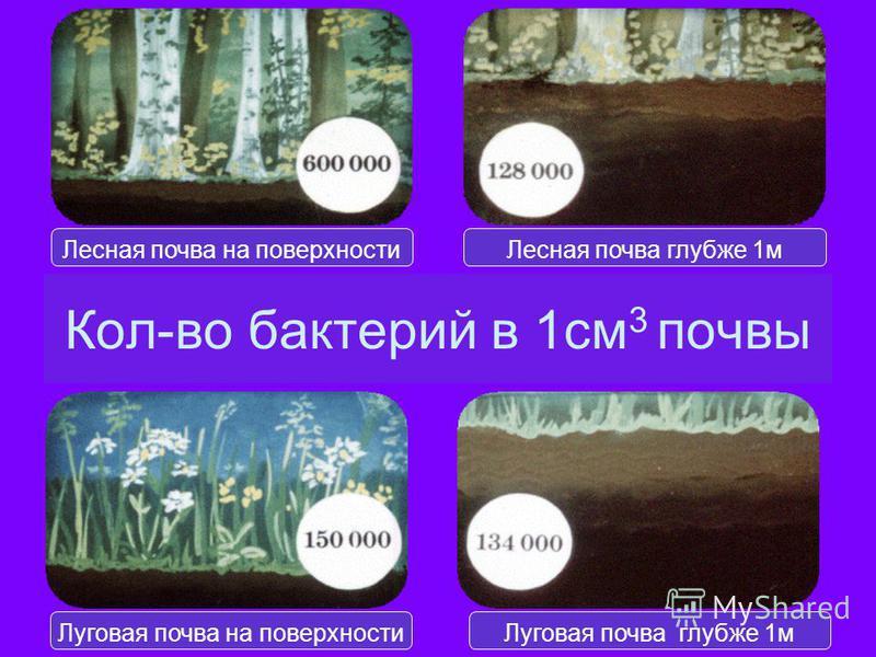 Кол-во бактерий в 1 см 3 почвы Лесная почва на поверхности Лесная почва глубже 1 м Луговая почва на поверхности Луговая почва глубже 1 м