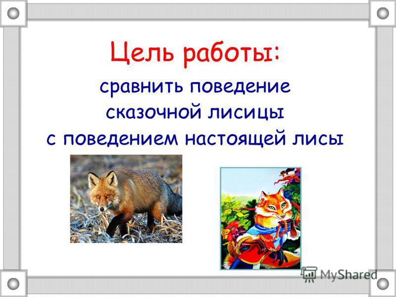 Цель работы: сравнить поведение сказочной лисицы с поведением настоящей лисы