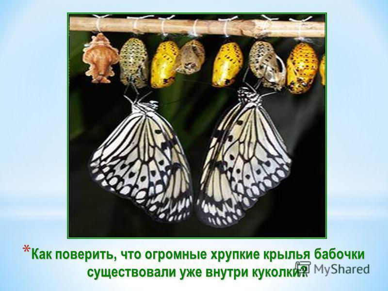 *К*К*К*Как поверить, что огромные хрупкие крылья бабочки существовали уже внутри куколки?