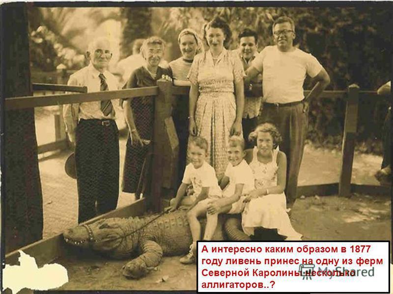 А интересно каким образом в 1877 году ливень принес на одну из ферм Северной Каролины несколько аллигаторов..?