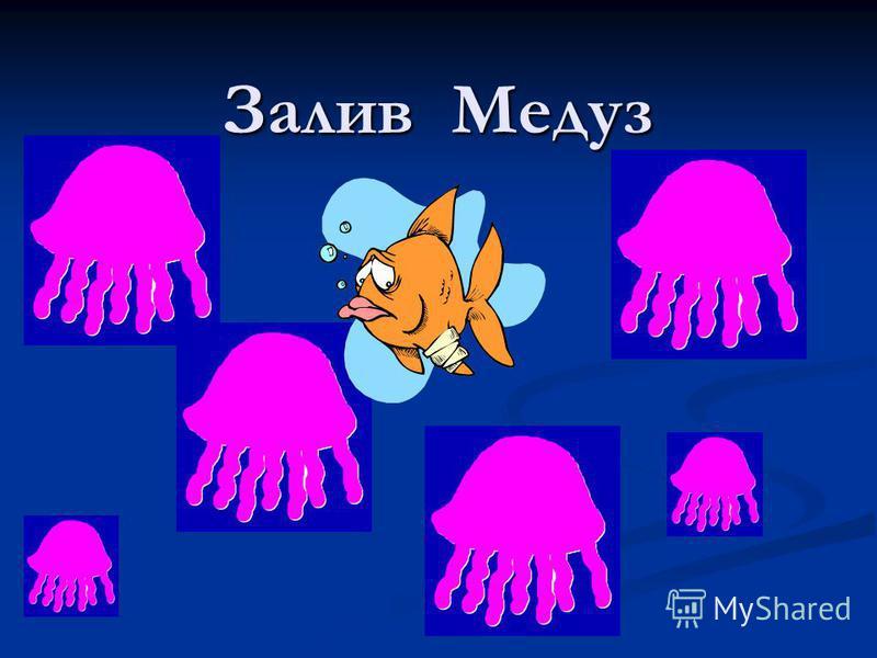 Залив Медуз