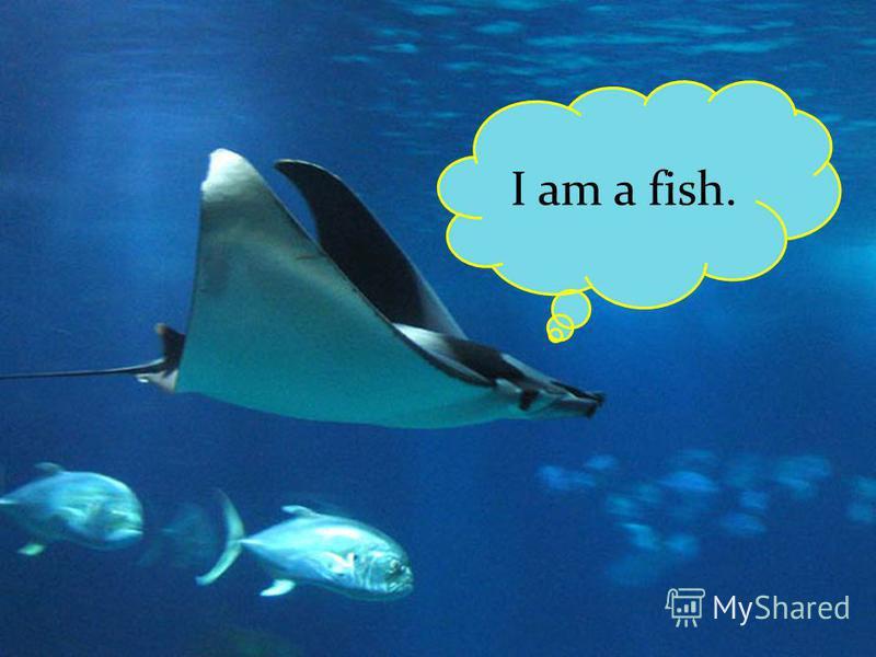 I am a fish.